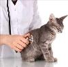 Ветеринарные клиники в Верхнем Ландехе
